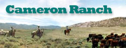 Cameron Ranch website design